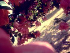 Spiderweb in flowers by marusweet, via Flickr Flowers, Photography, Photograph, Fotografie, Photoshoot, Royal Icing Flowers, Flower, Florals, Floral