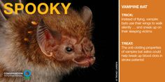 You might think of vampire bats as scary. But they actually have anti-clotting properties in their saliva that scientists think could be useful to treat stroke victims.
