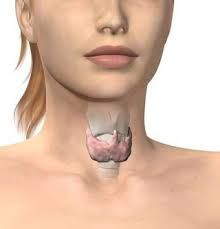 Most people with hypothyroidism take thyroid hormone daily for the rest of their life. And while thyroid hormone can do a good job of managing the symptoms of a Hypothyroidism Diet Plan, Thyroid Diet, Thyroid Issues, Thyroid Hormone, Thyroid Problems, Thyroid Health, Thyroid Gland, Fit Bodies, Health And Wellness