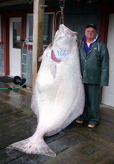 pecheur et gros poisson 13   Pêcheur et gros poisson   poisson photo pêcheur image