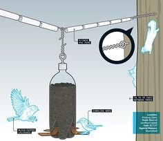 How to Build a Squirrel-Proof Bird Feeder