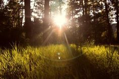 📸 sun rays grass nature  - get this free picture at Avopix.com    ✅ https://avopix.com/photo/16979-sun-rays-grass-nature    #sky #sun rays #landscape #grass #sun #avopix #free #photos #public #domain