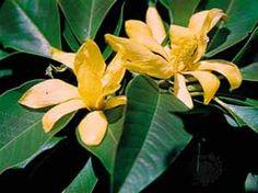 http://www.arthadharma.net/sacred-plants.html