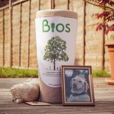 Biodegradable Pet Urn Tree from Firebox.com