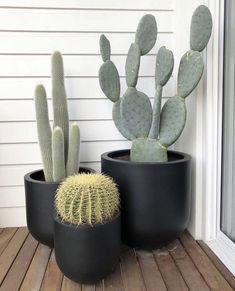 The Balcony Garden ( House Plants Decor, Cactus Decor, Plant Decor, Cactus Pot, Cactus Flower, Flower Pots, Indoor Cactus, Indoor Plants, Cacti And Succulents