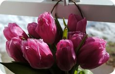 Love the deep pink Magical Forest, Pink Tulips, Spring Flowers, Organic Gardening, Blossoms, Serenity, Deep, Crafty, Creative
