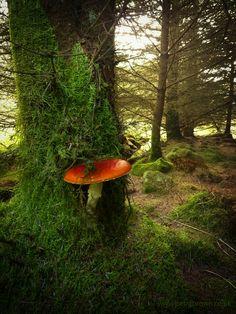 Mushroom..So cool!