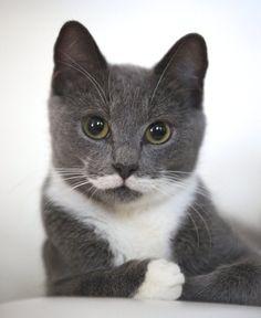 I mustache you a question ?? Am I cute ?