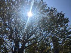 [p]夏は緑が綺麗で良いなと思いました。眩しすぎるほどの太陽を遮ってくれるのもありがたい、、