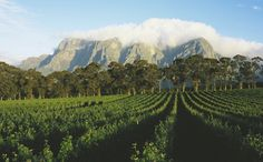It's 3 O'Clock in South Africa. An Insider's Guide to South Africa's Cape Winelands Oh The Places You'll Go, Places To Travel, Places To Visit, South African Wine, Wine Safari, Africa Travel, Vineyard, World, Outdoor