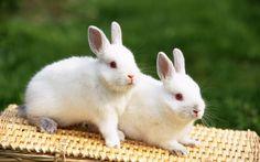 cute rabbits !!!
