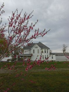 The peach blossoms in full bloom at the Dunham House. See more history at www.thedunhamhouse.com Peach Blossoms, Civil Rights, Obama, Bloom, History, House, Historia, Haus, Home