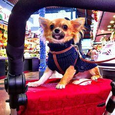 Pepe al #mercat de la #llibertat #mercatsbcn #menjar #food #foodporn #gastronomia #cuina #cooking #yummy #bcn #igers #igersbcn #igerscatalonia #iphonesia #statigram #fotodeldia #picoftheday #petitsplaers #beautiful
