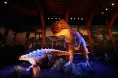 """Tyrannosaurus rex may have been the most fearsome creature ever to walk the Earth, but he was also a sensitive lover, a new dinosaur discovery suggests. The terrifying meat-eater, which stood 20 feet tall and had jaws bristling with serrated teeth up to nine inches long, had a snout as sensitive to touch as human fingertips, say scientists. Trex and other """"tyrannosaurs"""" would have used their tactile noses to investigate their surroundings, build nests, and carefully pick up fragile..."""