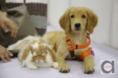 Inaugural Pet Expo at Singapore Expo Hall 6A this Weekend