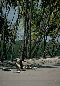 manzanilla beachtrinidad