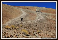 Posts about 2014 Viagens on Out There Overland - Explore. Tenerife, Country Roads, Spain, Viajes, Teneriffe