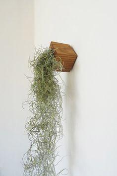 Ben je op zoek naar een leuke luchtplant. Bekijk dan hier eens de exotische planten van Etairnity. Met een handomdraai versier je de muur met prachtig groen