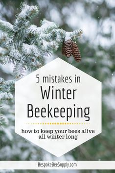 Wondering how to keep bees alive in winter? Read on to learn the 5 common mistakes beginner beekeepers make with winter beekeeping—and what to do instead. Honey Bee Farming, Dead Bees, Honey Store, Feeding Bees, How To Kill Bees, Beekeeping For Beginners, Bee Boxes, Overwintering, Backyard Beekeeping