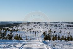Photo about Skiing tracks and beautiful winter scene in Hedmark county Norway. Spruce Forest and blue sky. Image of county, norway, spruce - 148820875 Beautiful Winter Scenes, Norway Spruce, Free Stock Photos, Skiing, Track, Sky, Illustration, Blue, Outdoor