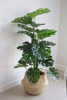 Coastal Home Decor with fake houseplants from Afloral indoor plants indoor plants fake afloralcom fake Hoya Carnosa Tricolor carnosa tricolorHoya Carnosa Tricolor carnosa Easy House Plants Decor IdeasNice 43 Easy House