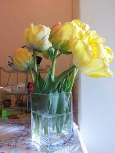 #tulip #akebono