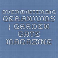 Overwintering Geraniums | Garden Gate Magazine