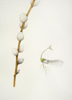 """Harbingers... """"Emerge,"""" 2012, graphite, colored pencil, and pastel on paper, 30 x 22 in."""