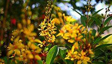 Žluté květiny