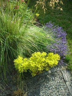 Julia's Gardens: Good Combinations