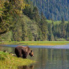 Khutzeymateen Grizzly Bear Sanctuary (Kelly Funk/All Canada photos),BC Canada Rocky Mountains, British Columbia, Vancouver, Canadian Wildlife, Haida Gwaii, O Canada, Whistler, Kayaking, Charlotte City