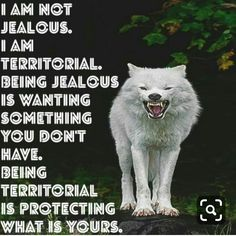 Wolf sayings and wolf wisdom en wolves quotes. Wolf Qoutes, Lone Wolf Quotes, True Quotes, Great Quotes, Motivational Quotes, Inspirational Quotes, Wolf Love, Warrior Quotes, She Wolf