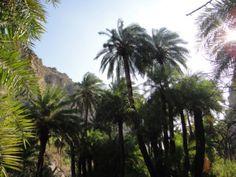 17122013-on-the-walk-in-palmbeach-prevelli-crete-greece Heraklion, Crete Greece, Palm Beach, Future, Summer, Photography, Fotografie, Future Tense, Summer Recipes