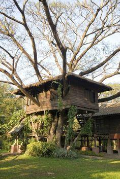 t-s-k-b: Sweet home / 96328_newtree_doi_3133.jpg (Immagine JPEG, 2592x3888 pixel)
