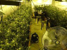 Entramos en las casas de la marihuana: hogar en la planta de arriba vivero en el sótano y cientos de miles de euros de beneficio