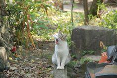 猫 ~ Cat ~