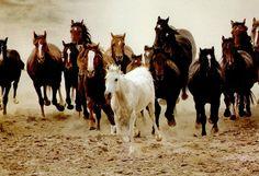 cavalos puro sangue