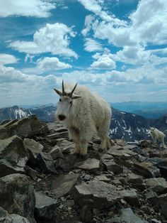 So these two just wouldn't leave me alone as I searched for solitude atop a mountain... - Imgur