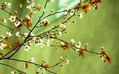 Picture Cool Backgrounds Spring Flower