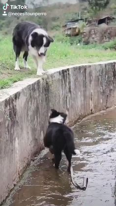 Funny Animal Videos, Cute Funny Animals, Cute Baby Animals, Funny Cute, Funny Dogs, Animals And Pets, Super Funny, Funny Humor, Cute Puppies