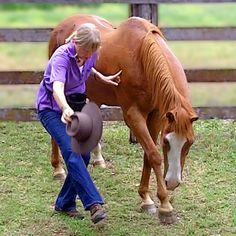 15 Best Horse Trick Training images in 2019   Horse tips