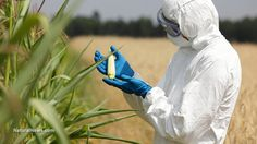 Russia says NO to GMO seeds