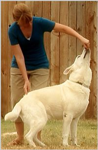 Dog training tips from a pro
