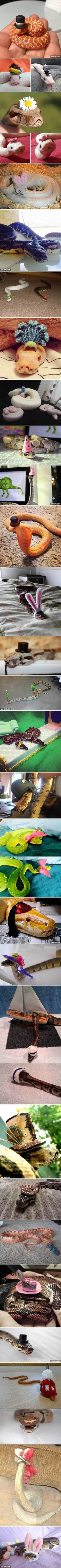 Scared Of Snakes? Put A Hat On It!