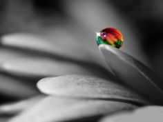 144 Best Black And White With Color Images Colors Nature
