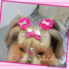 Hairstyle Dog - Model: Yorkshire Mel