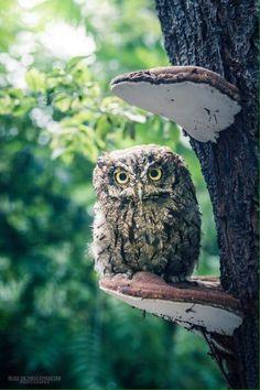 Owl and mushroom .