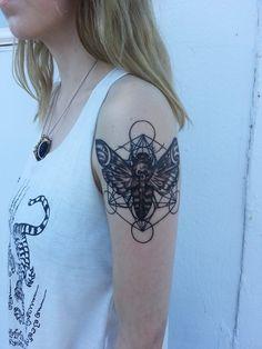 Geometric Fly by Ed Sheffer!