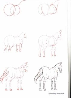 A website that gives info on horses, competitions, games, fun and much more to all the horse lovers out there! Horse Drawings, Animal Drawings, Cool Drawings, Pencil Drawings, Drawing Skills, Drawing Lessons, Drawing Techniques, Pencil Drawing Tutorials, Art Tutorials