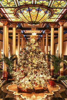 The Driskill Christmas Tree, Austin, Texas.  I have pictures with my grandchildren taken by this tree....